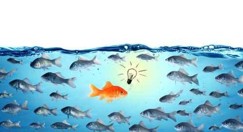 against the stream - opposite concept - leader goldfish